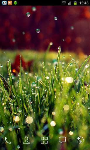 rain-grass