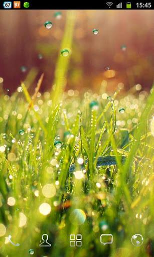 rain-grass2