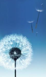dandelion-2